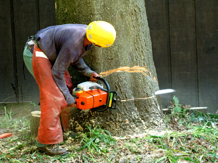 tree-and-stump-removal-requires
